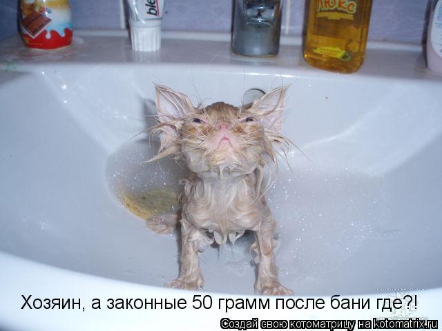 Котоматрица: Хозяин, а законные 50 грамм после бани где?!