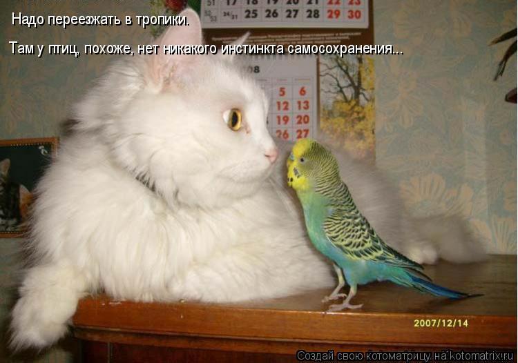 Котоматрица: Надо переезжать в тропики.  Там у птиц, похоже, нет никакого инстинкта самосохранения...