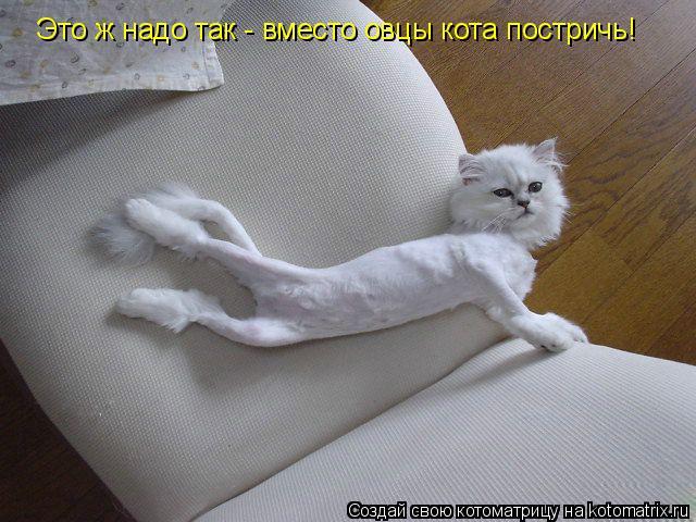 Котоматрица: Это ж надо так - вместо овцы кота постричь!