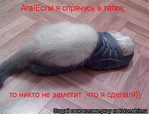 Котоматрица: Ага!Если я спрячусь в тапок, то никто не заметит ,что я сделал!))