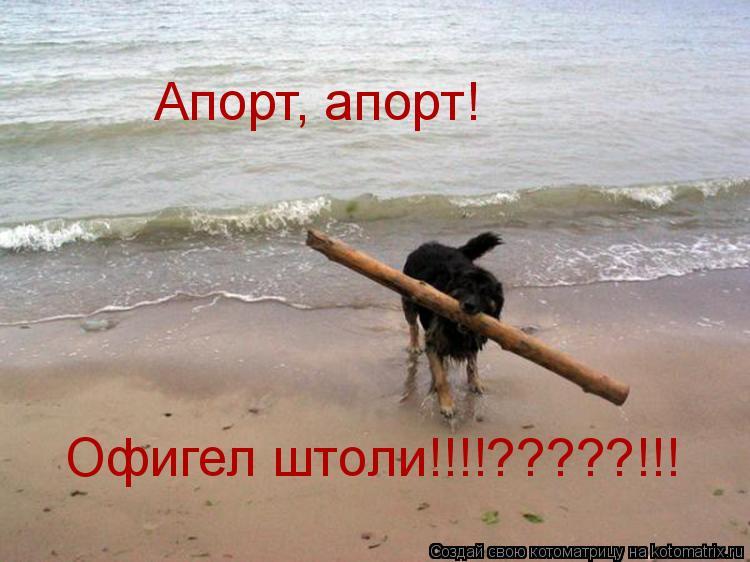 Котоматрица: Офигел штоли!!!!?????!!! Апорт, апорт!
