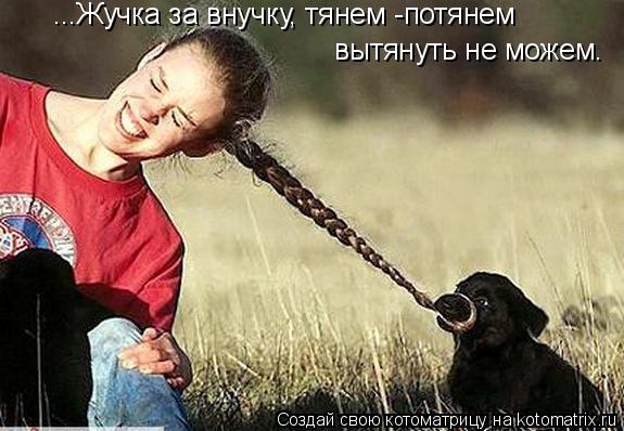 Котоматрица: ...Жучка за внучку, тянем -потянем вытянуть не можем.