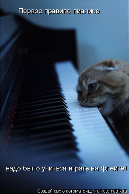 Котоматрица: Первое правило пианино ... надо было учиться играть на флейте!