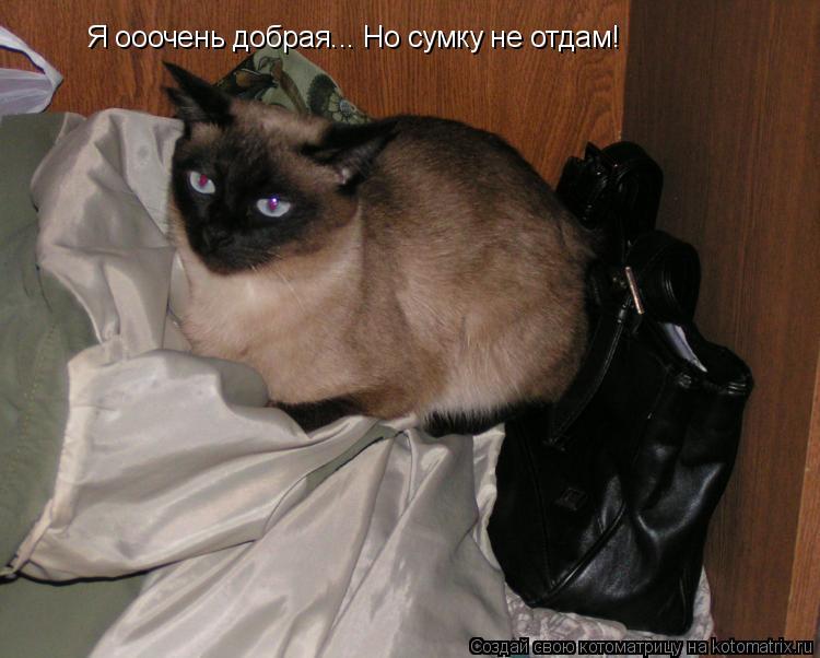 Котоматрица: Я ооочень добрая... Но сумку не отдам!