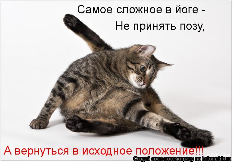 Котоматрица: Самое сложное в йоге -  Не принять позу, А вернуться в исходное положение!!!