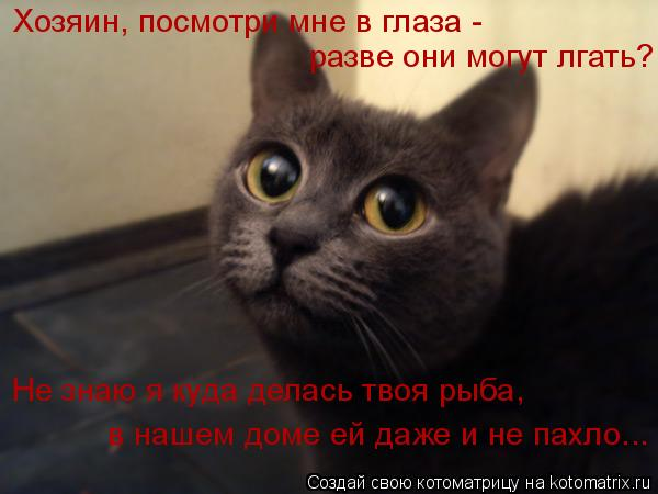 Котоматрица: Хозяин, посмотри мне в глаза - разве они могут лгать? Не знаю я куда делась твоя рыба, в нашем доме ей даже и не пахло...