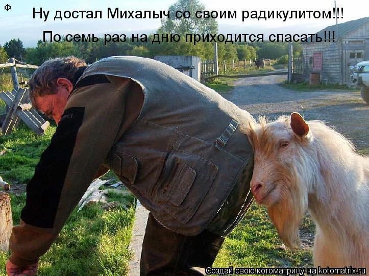 Котоматрица: Ну достал Михалыч со своим радикулитом!!! По семь раз на дню приходится спасать!!!