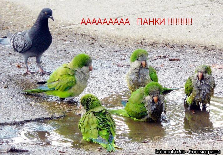 Котоматрица: ААААААААА   ПАНКИ !!!!!!!!!!