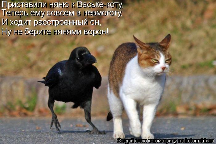 Котоматрица: Приставили няню к Ваське-коту, Теперь ему совсем в невмоготу, И ходит расстроенный он, Ну не берите нянями ворон!