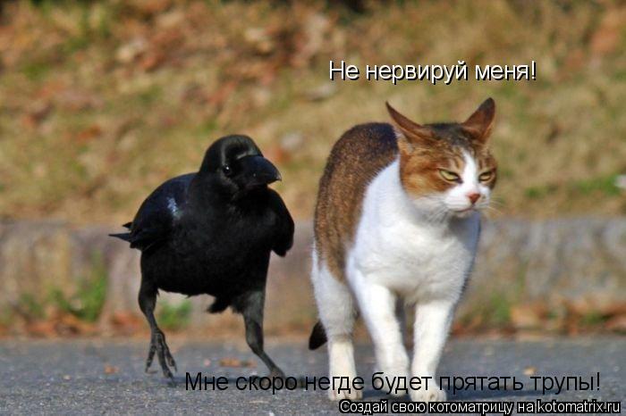 Котоматрица: Не нервируй меня!  Мне скоро негде будет прятать трупы!