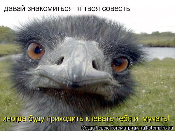 Котоматрица: давай знакомиться- я твоя совесть иногда буду приходить клевать тебя и  мучать!