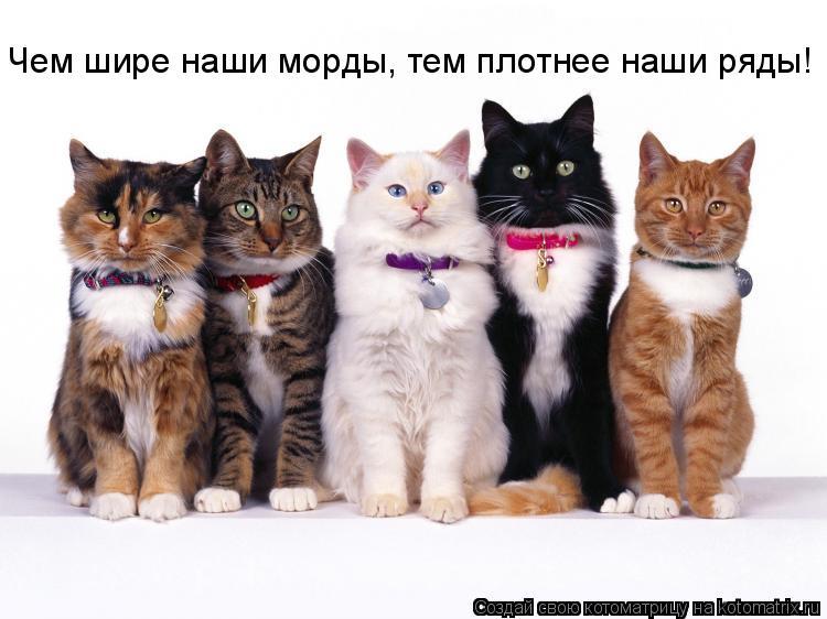 Котоматрица: Чем шире наши морды, тем плотнее наши ряды!
