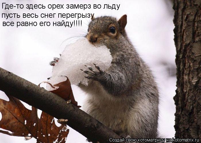 Котоматрица: Где-то здесь орех замерз во льду пусть весь снег перегрызу все равно его найду!!!!