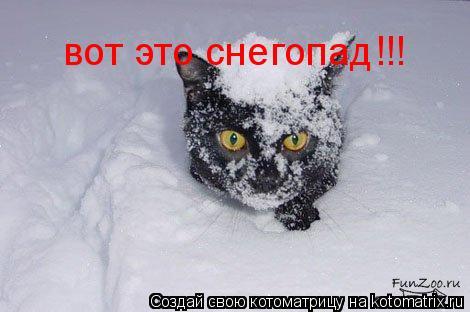 Котоматрица: вот это снегопад!!!