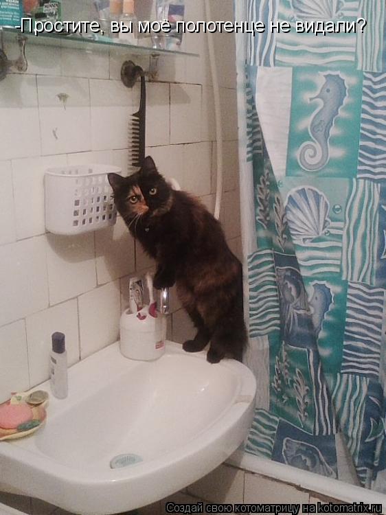 Котоматрица: -Простите, вы моё полотенце не видали?