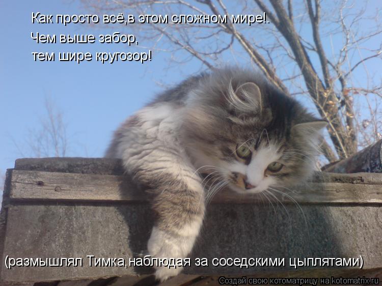Котоматрица: Чем выше забор, тем шире кругозор! Как просто всё,в этом сложном мире!. (размышлял Тимка,наблюдая за соседскими цыплятами)