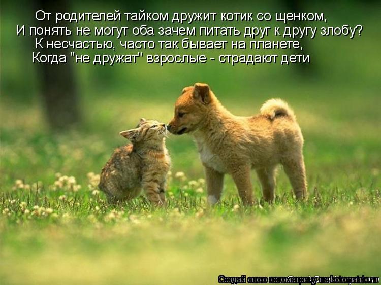 Котоматрица: От родителей тайком дружит котик со щенком, И понять не могут оба зачем питать друг к другу злобу? К несчастью, часто так бывает на планете, К