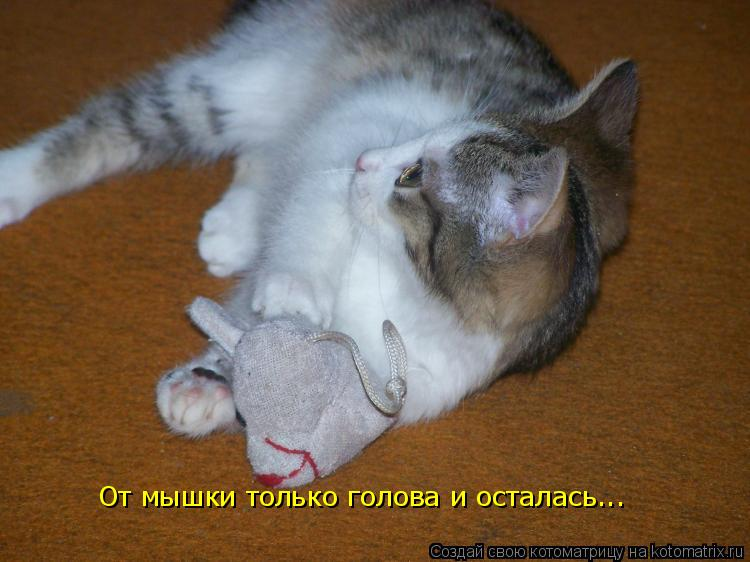 Котоматрица: От мышки только голова и осталась...