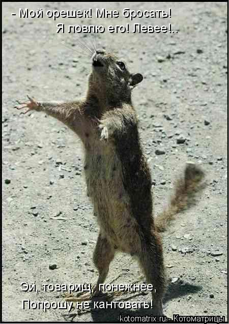 Котоматрица: - Мой орешек! Мне бросать! Я ловлю его! Левее!.. Эй, товарищ, понежнее, Попрошу не кантовать!