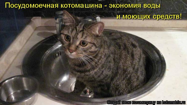 Котоматрица: Посудомоечная котомашина - экономия воды и моющих средств!