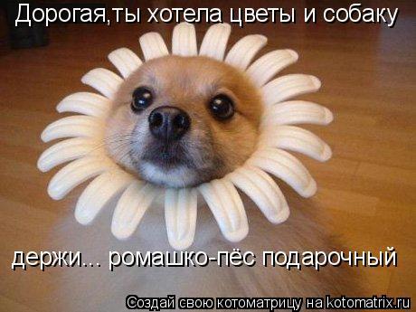 Котоматрица: Дорогая,ты хотела цветы и собаку держи... ромашко-пёс подарочный