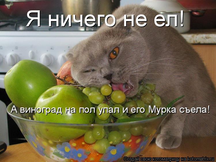 Котоматрица: Я ничего не ел! А виноград на пол упал и его Мурка съела!