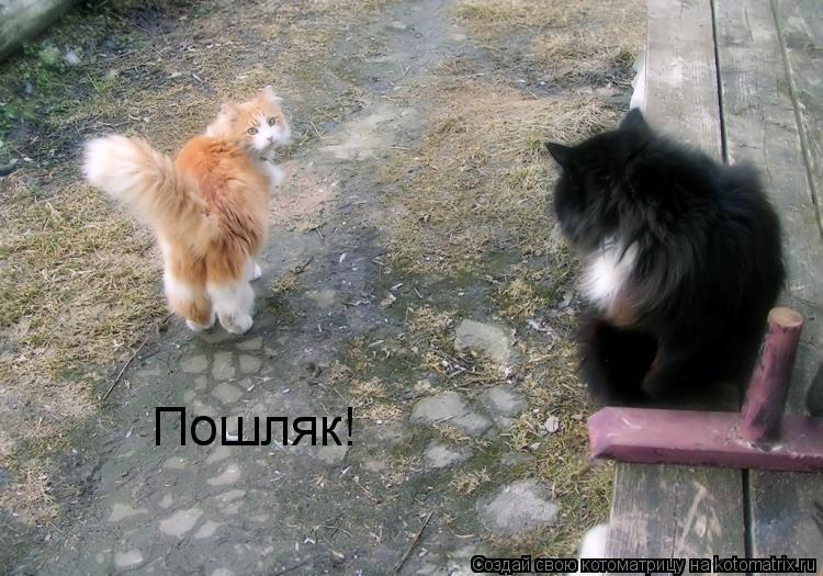 Котоматрица: Пошляк!