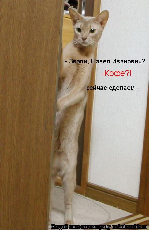 Котоматрица: - Звали, Павел Иванович? -Кофе?! -сейчас сделаем...