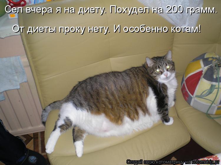 Котоматрица: Сел вчера я на диету. Похудел на 200 грамм. От диеты проку нету. И особенно котам!