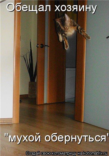 """Котоматрица: Обещал хозяину  """"мухой обернуться""""..."""