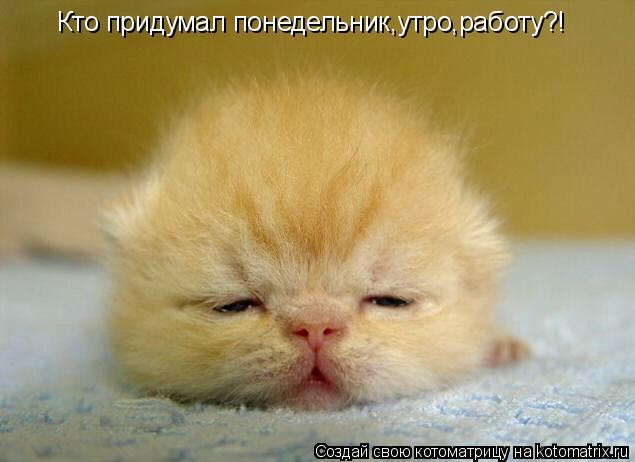 Котоматрица: Кто придумал понедельник,утро,работу?!