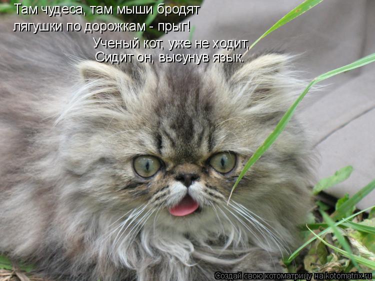Котоматрица: Там чудеса, там мыши бродят лягушки по дорожкам - прыг! Ученый кот, уже не ходит, Сидит он, высунув язык.