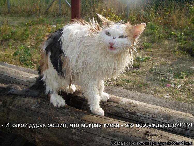 Фото жутко мокрой киски, далила ди лаззаро голая