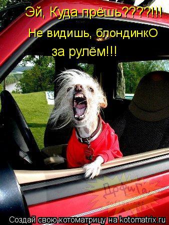 Котоматрица: Эй, Куда прёшь????!!! Не видишь, блондинкО  за рулём!!!