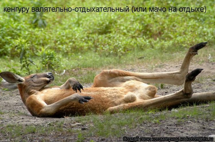 Котоматрица: кенгуру валятельно-отдыхательный (или мачо на отдыхе)