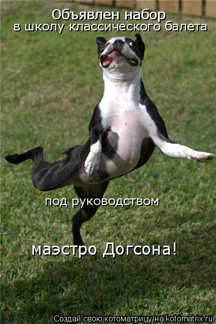 Котоматрица: Объявлен набор  в школу классического балета под руководством маэстро Догсона!