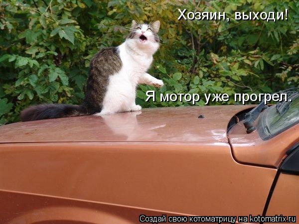 Котоматрица: Хозяин, выходи! Я мотор уже прогрел.