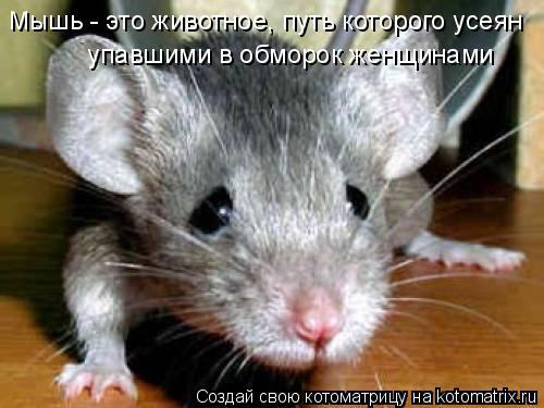 Котоматрица: Мышь - это животное, путь котоpого усеян  упавшими в обмоpок женщинами