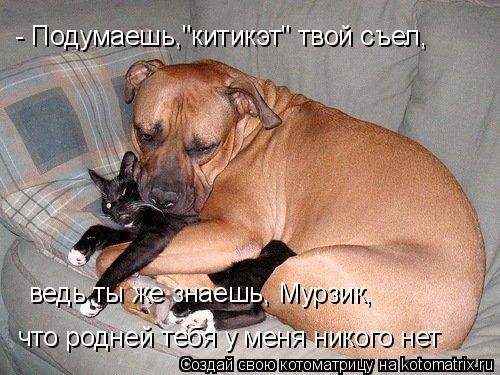 """Котоматрица: что родней тебя у меня никого нет ведь ты же знаешь, Мурзик,  - Подумаешь,""""китикэт"""" твой съел,"""