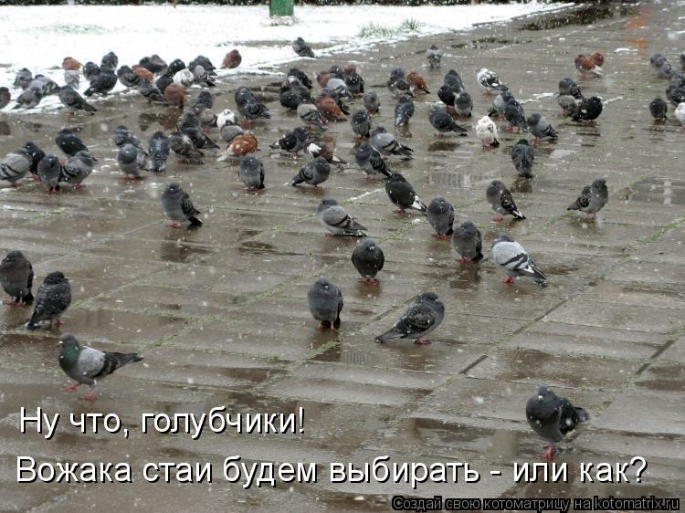 Котоматрица: Ну что, голубчики! Вожака стаи будем выбирать - или как?