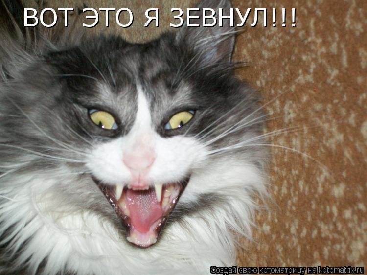 Котоматрица: ВОТ ЭТО Я ЗЕВНУЛ!!! ВОТ ЭТО Я ЗЕВНУЛ!!!