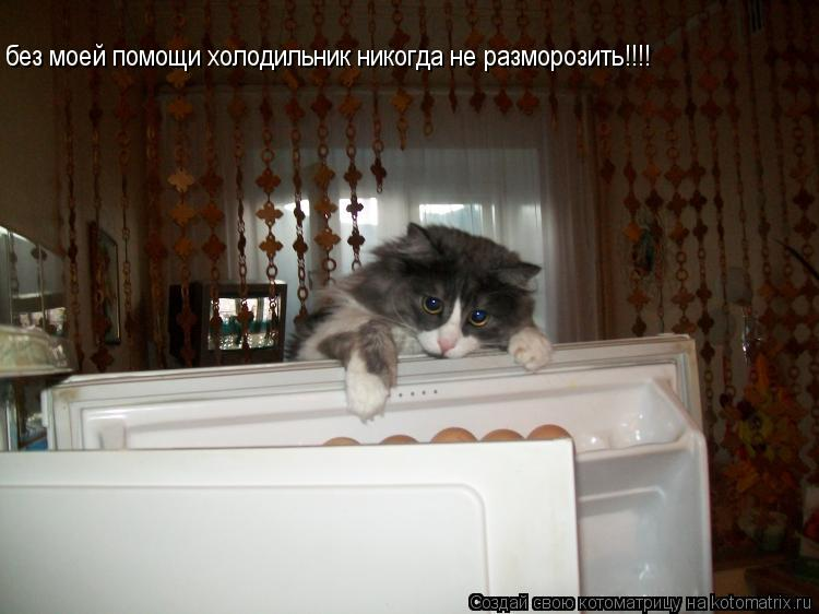 Котоматрица: без моей помощи холодильник никогда не разморозить!!!!