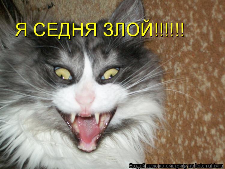 Котоматрица: Я СЕДНЯ ЗЛОЙ!!!!!!