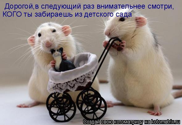 Котоматрица: Дорогой,в следующий раз внимательнее смотри, КОГО ты забираешь из детского сада