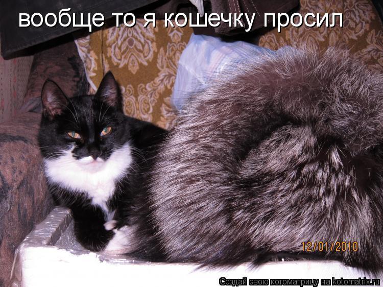 Котоматрица: вообще то я кошечку просил