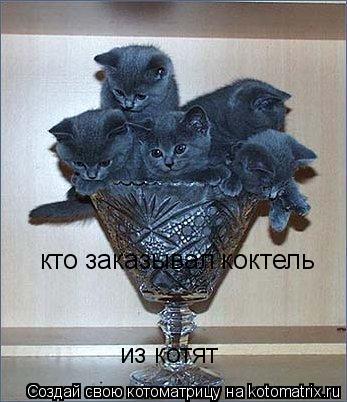 Котоматрица: кто заказывал коктель  из котят