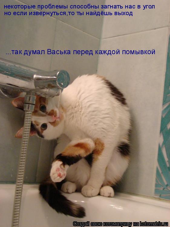 Котоматрица: некоторые проблемы способны загнать нас в угол но если извернуться,то ты найдёшь выход ...так думал Васька перед каждой помывкой