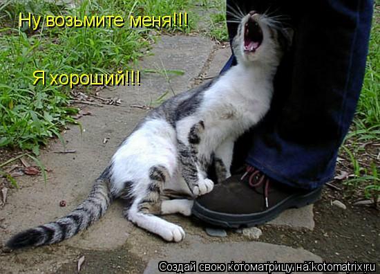 Котоматрица: Ну возьмите меня!!! Я хороший!!!