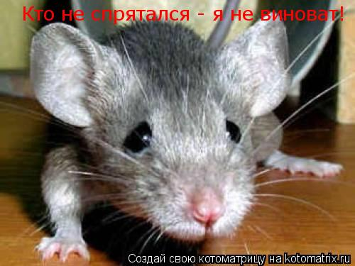 Котоматрица: Кто не спрятался - я не виноват!