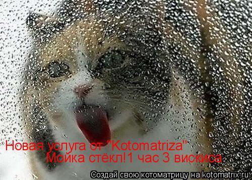 "Котоматрица: Новая услуга от ""Kotomatriza"" Мойка стёкл!1 час 3 вискиса"